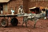 Boy and the donkey cart at Ginir town market, Oromiya, Ethiopia.