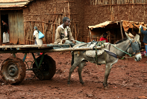 Boy and the donkey cart at Ginir town market, Oromiya, Ethiopia.