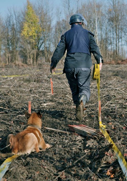 One meter wide safe lane is marked with yellow tape. The flat land looks like the former forest destroyed by clearcutting.
