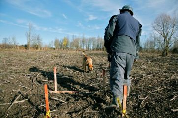 Five years old Belgian Sheperd Malinois Aaron takes a step to unexplored mine field, the tip of its snout barely touching the ground, searching. We can hear the uninterrupted sound of the fast breathing through the snout. The dog is perfectly concentrated and searches half meter wide and perfectly straight forward lane. Dog handler Alen Krijestorac checks the direction marks from the other side of the yellow square.