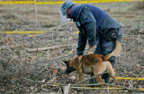 """""""Søk!"""" The used command language is Norwegian, as it is for every mine detection dog trained by Norwegian People's Aid (NPA)."""