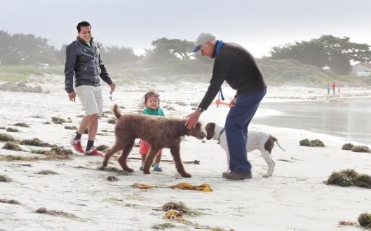 Beachlife at Carmel by the Sea, California