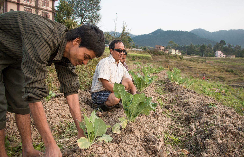 Yognath Sharma (vasemmalla) avustaa sokeita luomuviljelijöitä. Peltotöiden lisäksi hänen tehtäviinsä kuuluu sadon myynti paikallisilla markkinoilla.